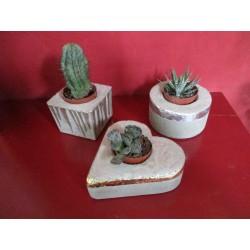 3 Caches pots en béton pour cactus